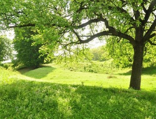 Grundstückskauf und was zu beachten ist